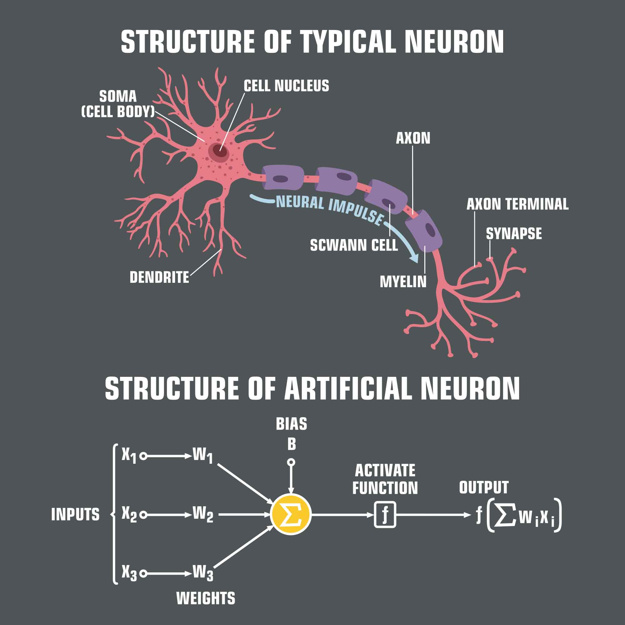 Structure of artificial neuron