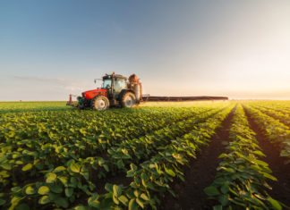 crop infestation using machine learning